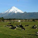 Earth Energies in New Zealand