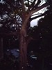 orbs, lights and phenomen in trees