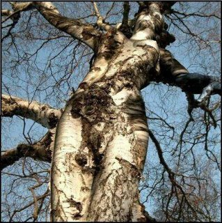learning about interacting with faery folk and nature devas like trees
