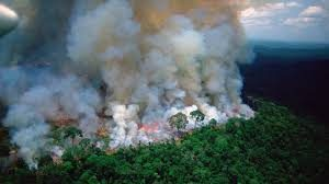 Image of Fires in the Amazon