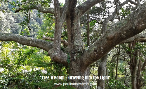 Tree wisdom and growing into the light