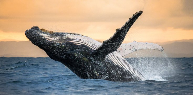 the whales share their medicine to help us remember